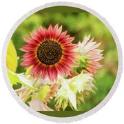 Red Sunflower, Provence, France Round Beach Towel