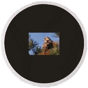 Red Tail In The Pines Round Beach Towel