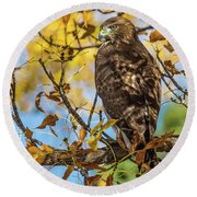 Red-tailed Hawk In Fall Color Round Beach Towel