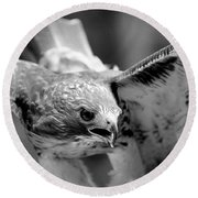 Red-tailed Hawk In Flight Round Beach Towel