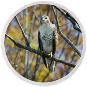 Red-tailed Hawk In The Fall Round Beach Towel