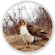 Red Tailed Hawk In The Field Round Beach Towel