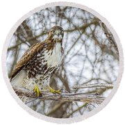 Red Tailed Hawk,  Round Beach Towel