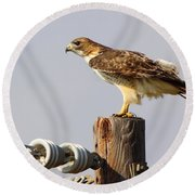 Red Tailed Hawk Perched Round Beach Towel