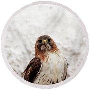 Red Tailed Hawk Portrait Round Beach Towel