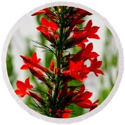 Red Texas Plume Flowers Round Beach Towel