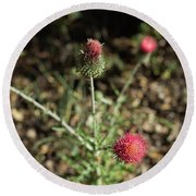 Red Thistle Morning Sunlight Round Beach Towel