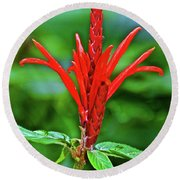 Red Tropical Flower In Huntington Botanical Gardens In San Marino-california  Round Beach Towel