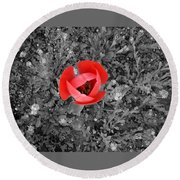 Red Tulip From Above Round Beach Towel