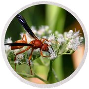 Red Wasp On Lace Round Beach Towel