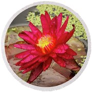 Red Water Lily Round Beach Towel