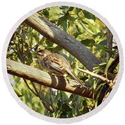 Red Wattlebird Australia Round Beach Towel