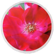 Red White Rose Round Beach Towel