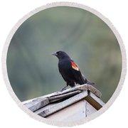 Male Red Wing Black Bird Round Beach Towel