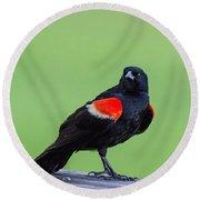 Red Wing Blackbird Round Beach Towel