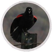 Red Winged Black Bird Round Beach Towel