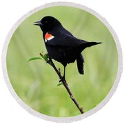 Red Winged Blackbird Round Beach Towel