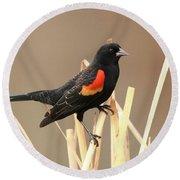 Red Winged Blackbird I I Round Beach Towel
