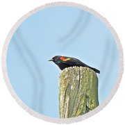 Red-winged Blackbird On Lookout Duty Round Beach Towel