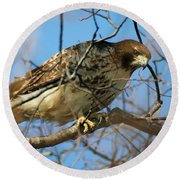 Redtail Among Branches Round Beach Towel