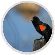 Redwing Morning Round Beach Towel