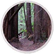 Redwood Grove Round Beach Towel