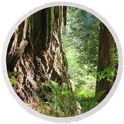Redwood Tree Art Prints Redwoods Forest Round Beach Towel
