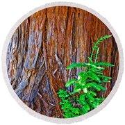 Redwood Tree Trunk At Pilgrim Place In Claremont-california   Round Beach Towel
