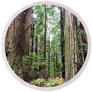 Redwood5 Round Beach Towel