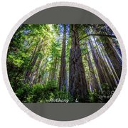 Redwoods National Forrest Trees Of Mistery Round Beach Towel