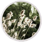 Reed  Round Beach Towel