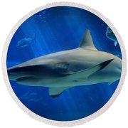 Reef Shark Round Beach Towel