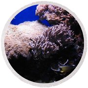 Reef Tank Round Beach Towel