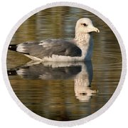 Young Gull Reflections Round Beach Towel