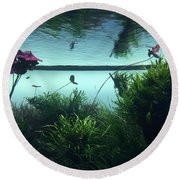 Reflections Of Waterlii Round Beach Towel