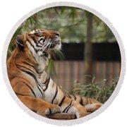 Regal Tiger Round Beach Towel