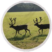 Reindeers On Swedish Fjeld Round Beach Towel
