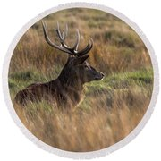 Relaxing Deer Round Beach Towel