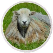 Relaxing In The Pasture Round Beach Towel