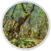Relaxing Planes Trees Arbor Round Beach Towel