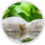 Reflected Little Stinger Taking A Sip 2 By Chris White Round Beach Towel