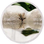 Reflected Little Stinger Taking A Sip By Chris White Round Beach Towel