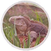 Reptile Land  Round Beach Towel