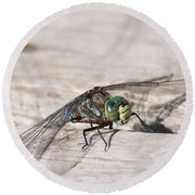 Rescued Dragonfly Round Beach Towel