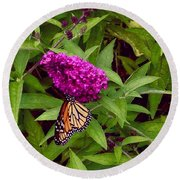 Resting Butterfly 1 Round Beach Towel