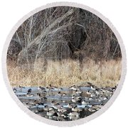 Resting Canadian Geese Round Beach Towel