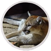 Resting Cougar Round Beach Towel