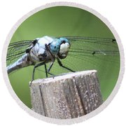 Resting Dragonfly Round Beach Towel
