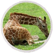 Resting Giraffe Round Beach Towel