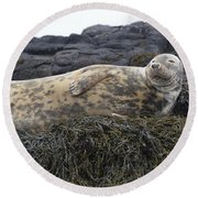 Resting Gray Seal On Seaweed Round Beach Towel